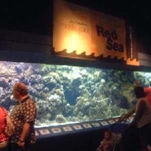 3000 gallon reef